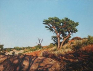 """Thorn tree, Kalahari"" Oil on canvas, 50cm x 65cm"