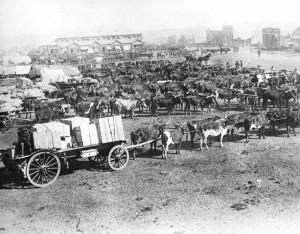 Transportryers in Johannesburg