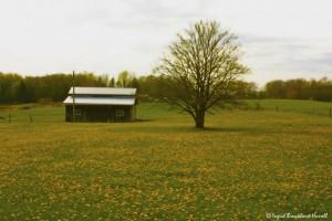Omring van lentegeel, herinner dié huis my aan Ouma se huis, destyds op Louwsburg...