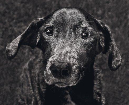 My Hond Deel Twee