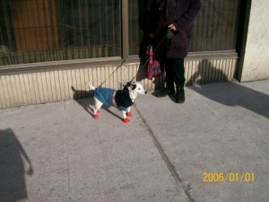 Hond in Ottawa