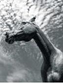 Wij, paarden