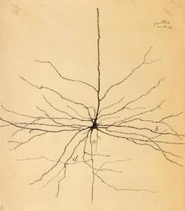 Neuron in menslike retina
