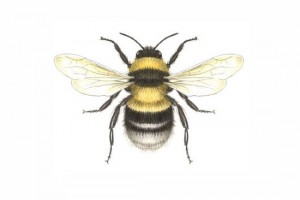 bee_drawing
