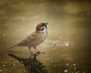 Sparrow_Bird_by_bleu3t