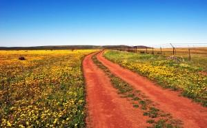 Noord-Kaapse rooigrondpad